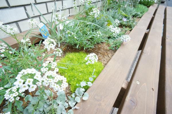外には花壇もあって、季節に応じてお花が咲きます。