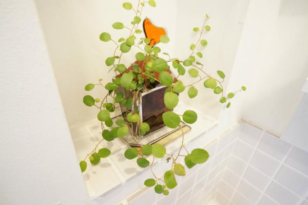 洗面脇にも、観葉植物があります。