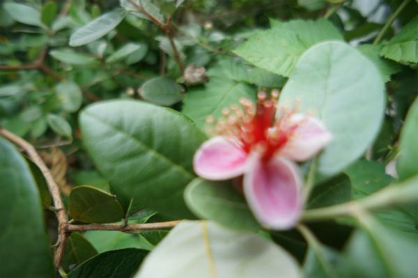 お庭に咲くお花の種類もいろいろ。