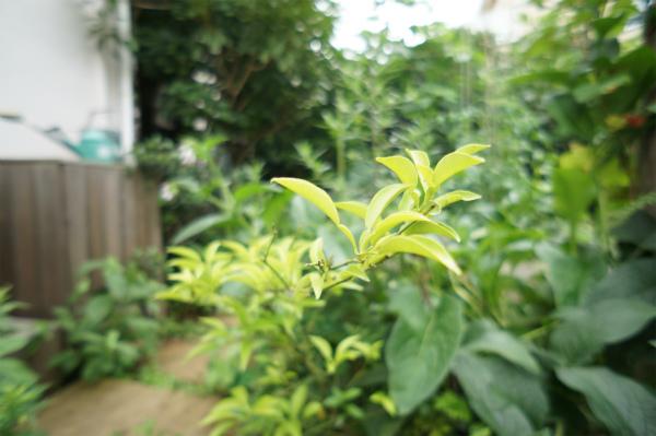 疲れたらお庭に出よう!マイナスイオンを浴びれば、リフレッシュ間違いなし。