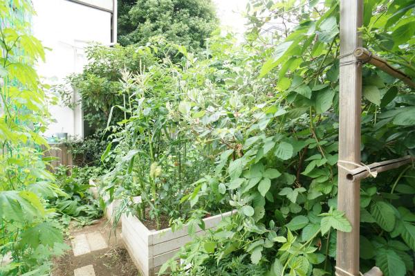 こちらは家庭菜園スペース。気軽に土のぬくもりを感じられます。