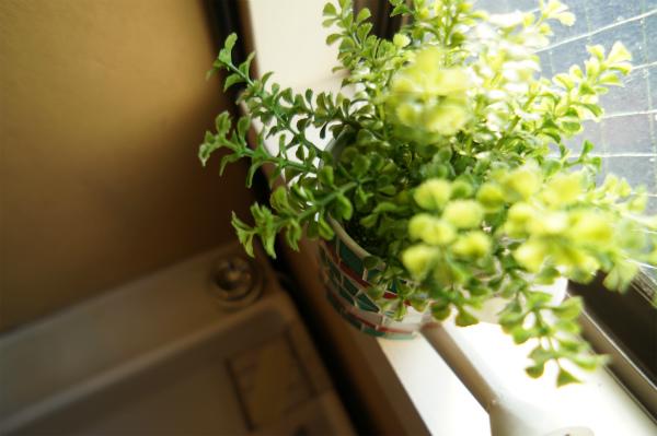 窓際にもかわいいグリーンが。