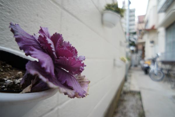 アプローチ部分にはお花が飾られています。