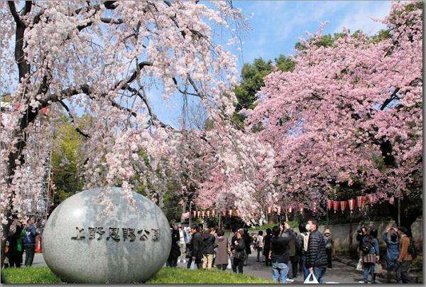 上野公園を完全攻略!シェアメイトと1日かけて巡りたい、上野の有名スポット
