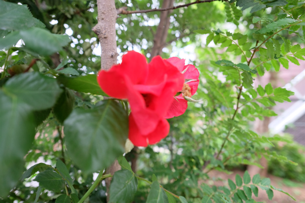 お庭にはかわいいお花が咲いています。