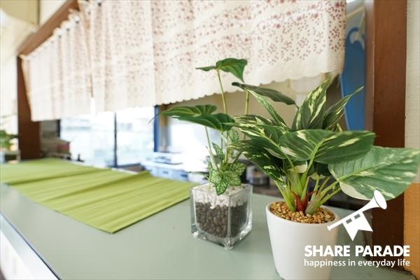 観葉植物がかわいい。